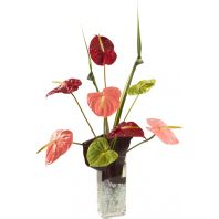 Anthurium Burst