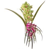 Tropical Cymbidium Orchid Spray