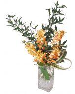Mokara Orchid Sunshine