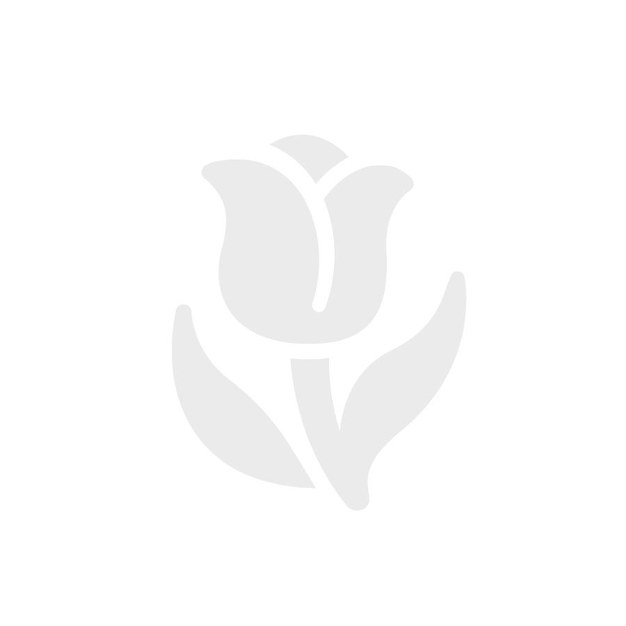 Tropical Cymbidium Orchid Spray